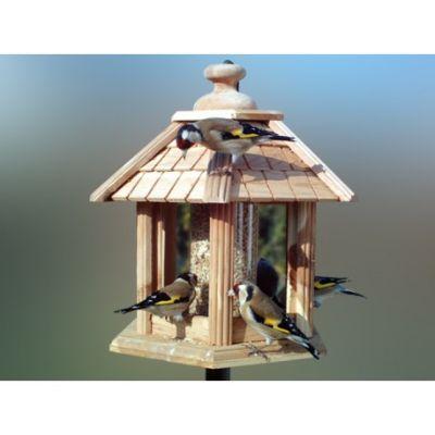 Oiseaux - Gardif Oisillon