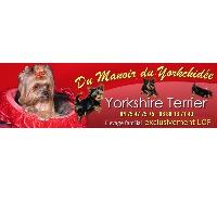 Logo Elevage Yorkshire terrier - Du Manoir du Yorkchidée