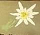 Logo Le Farinaud