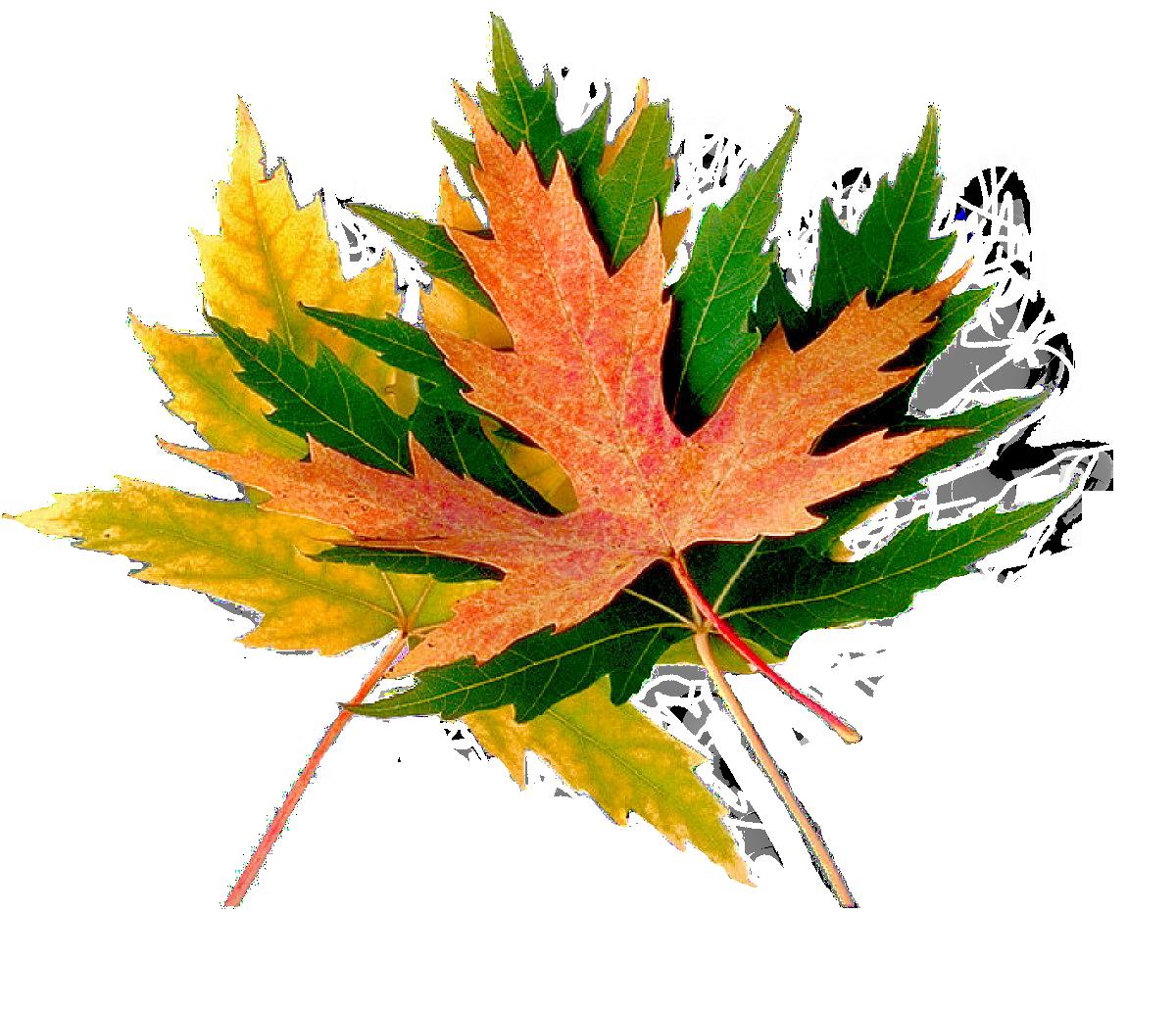 Logo Arboritum