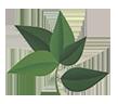 Logo Jardins Chris