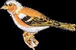 Logo Winstub Fink'Stuebel