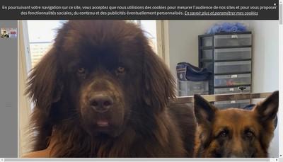 Site internet de O' Rendez-Vous Canin